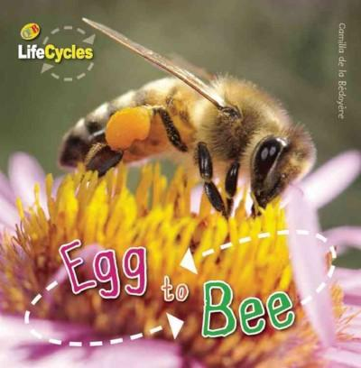 Egg to Bee (Hardcover)