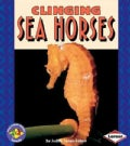 Clinging Sea Horses (Paperback)