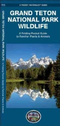 Grand Teton National Park Wildlife: An Introduction to Familiar Species (Wallchart)