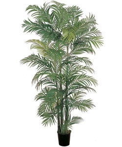 (6')Areca Silk Palm Tree