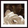 Rebecca Swanson 'Gardenia Garden' Wood Framed Art Print