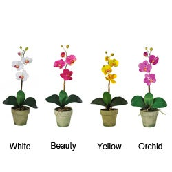 Potted Phalaenopsis Silk Orchid Arrangement (Case of 20)