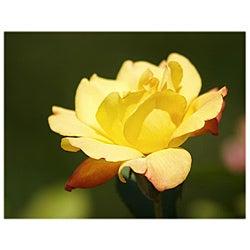 Orange Cat Art Jill M. Davis 'Yellow Rose Blossom' Photographic Print