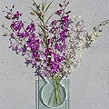 Dendrobium Orchids (6 Stems)