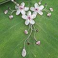 Stainless Steel 'Floral' Rose Quartz and Garnet Necklace (Thailand)
