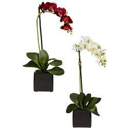 Phaleanopsis Orchid with Black Vase (Set of 2)