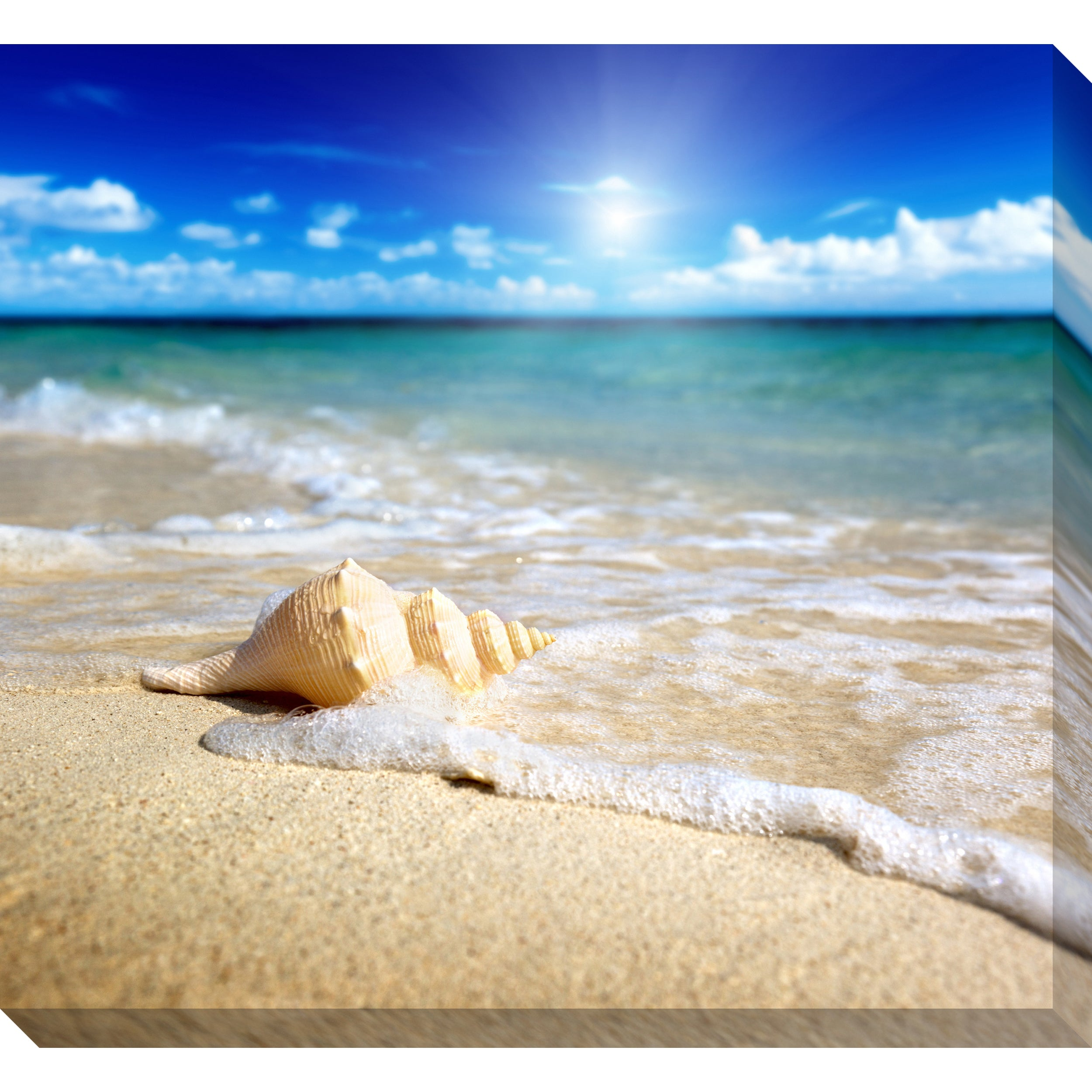 Seashell on Beach Oversized Gallery Wrapped Canvas