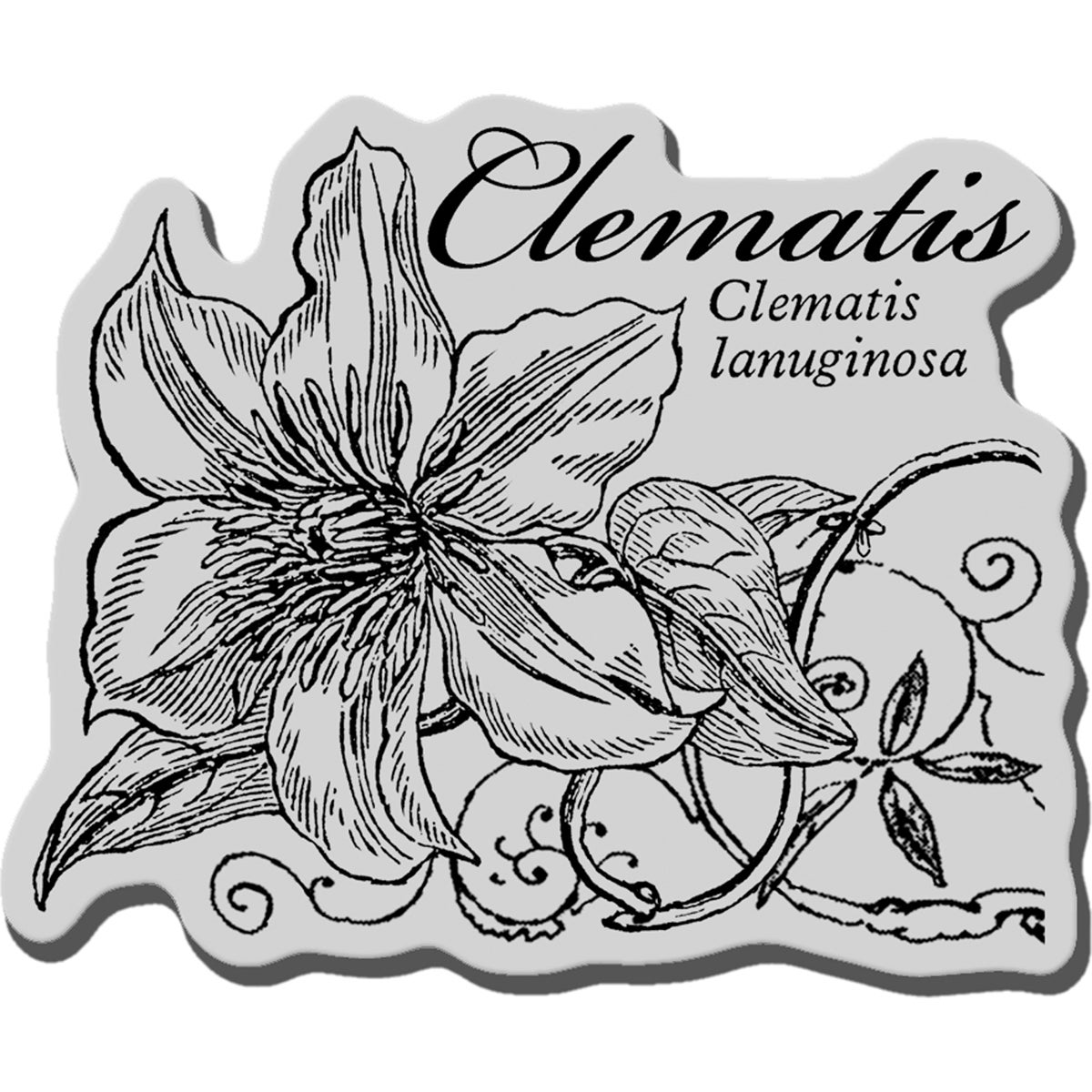 Stampendous Cling Rubber Stamp-Botanical Clematis