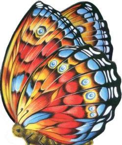 Little Butterfly (Board book)