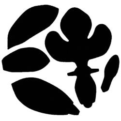 Punch Bunch 'Cymbidium Orchid' Super Giant Punch