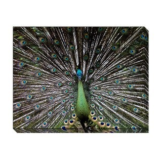 The Peacock Oversized Gallery Wrapped Canvas