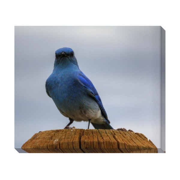 Mountain Blue Bird Oversized Gallery Wrapped Canvas