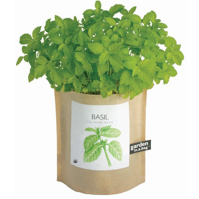 Garden-in-a-Bag Herb Collection Organic Basil