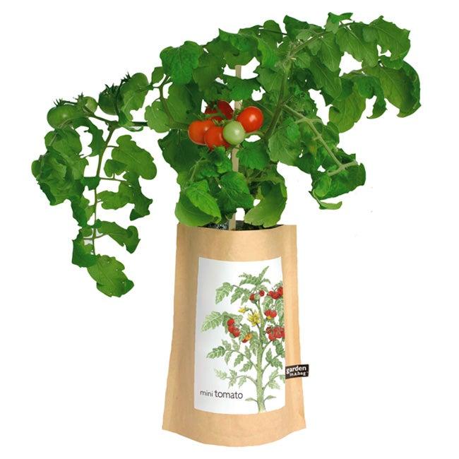 Mini Tomato Garden-in-a-Bag