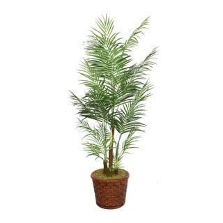 "Laura Ashley 81"" Tall Areca Palm Tree in 17"" Fiberstone Planter"