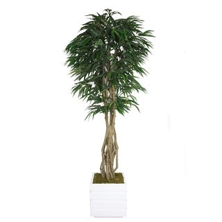 Laura Ashley 84-inch Tall Willow Ficus and Multiple Trunks in 14-inch Fiberstone Planter