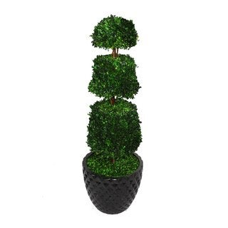 """Laura Ashley 49.5"""" Tall Preserved Natural Spiral Boxwood Cone Topiary in 16"""" Fiberstone Planter"""