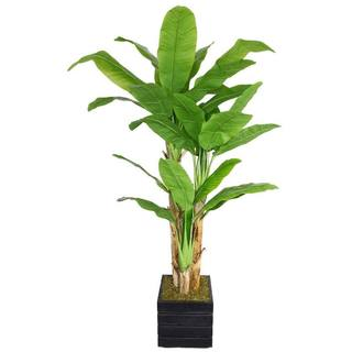 "Laura Ashley 78"" Tall Banana Tree with Real Touch Leaves in 14"" Fiberstone Planter"