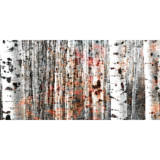Parvez Taj 'Tree Ski' Canvas Print