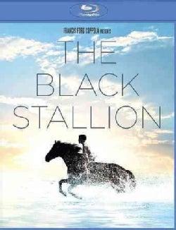 The Black Stallion (Blu-ray Disc)