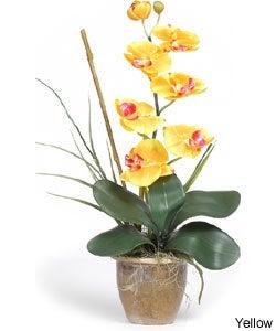 Single-stem Phalaenopsis Silk Orchid Plant