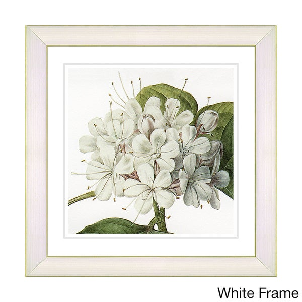 22x22 white frame 14x14 white frame zhee singer vintage botanical no