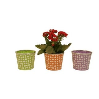 Assorted 5-inch Pastel/ Dots Distressed Containers (Set of 6)