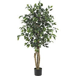 Ficus 4-foot Silk Tree