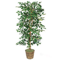 Green Ficus 6-foot Artificial Plants (Pallet of 16)