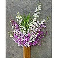 20 Stems Dendrobium Orchids