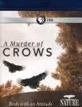 Nature: A Murder of Crows (Blu-ray Disc)